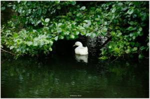Pond Life I
