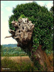 Head-Tree