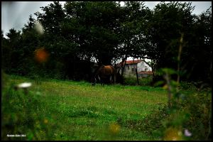 Horse in a Field II