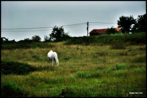 Horse in a Landscape
